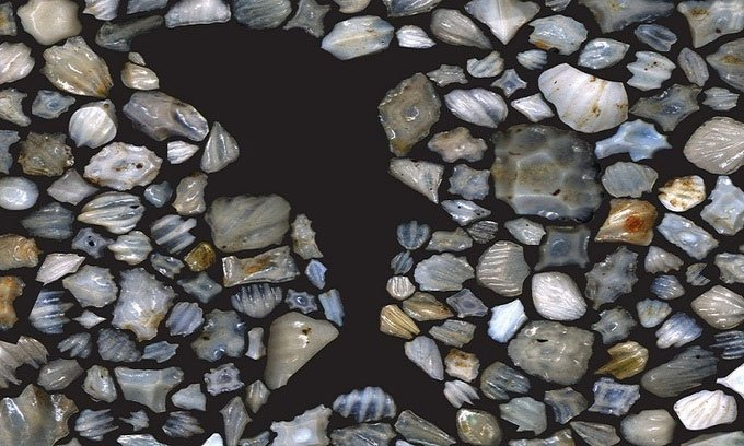 Hóa thạch răng bì của các loại cá mập khác nhau.