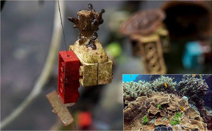 Ý tưởng dùng Lego để phục hồi rạn san hô.